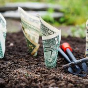 Growing dollar bills in soil