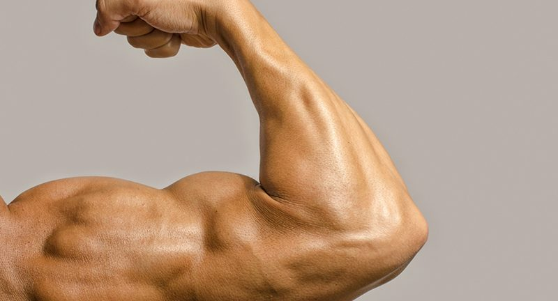 Flexed muscle