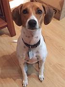 Suzie Morris, Dog