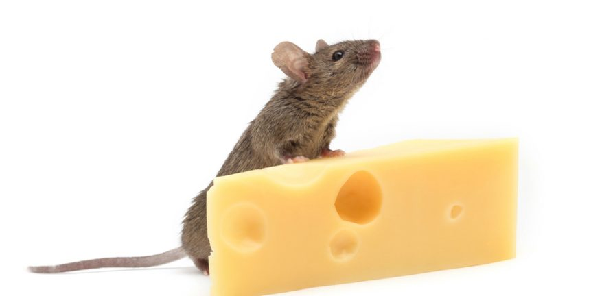 Following the cheese