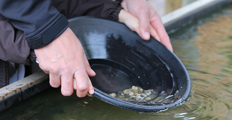 Prospecting, panning for gold