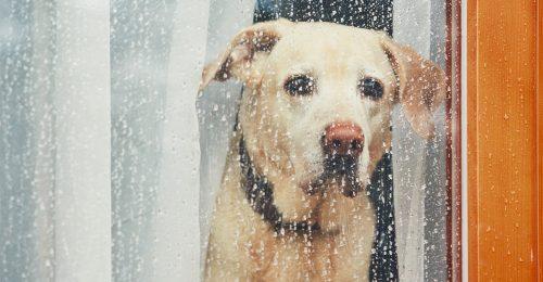 Sad Dog Missing Out