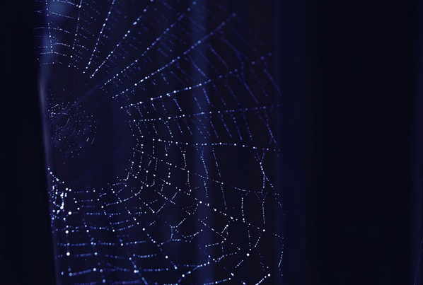 Web on a dark background