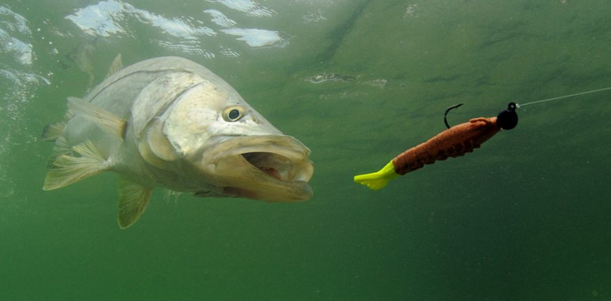 Fishing with Lure
