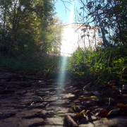 Path in Woods with Ray of Sunlight