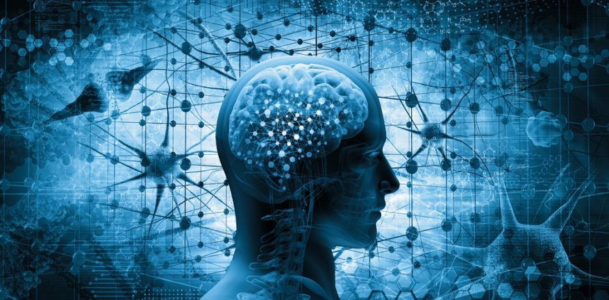Brain, Cortex, AI