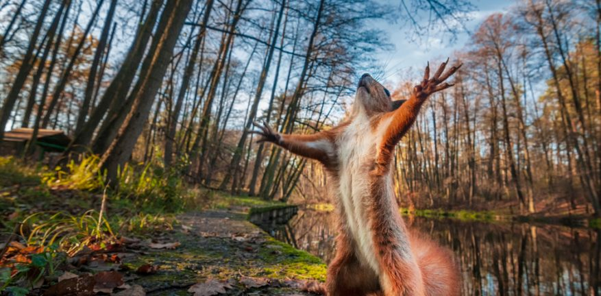 Excited Squirrel in Forest