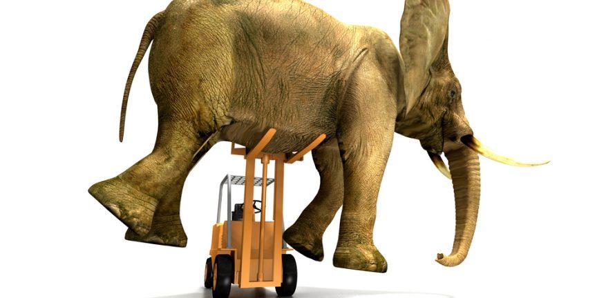 Heavy lift, elephant on forklift